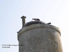 Cigogne en Camargue