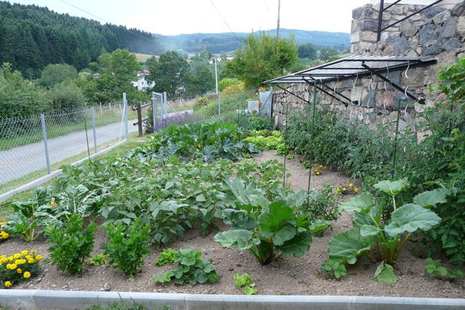 Potager biologique 2009 christiane et michel - Bettes au jardin ...