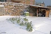 Le potager en décembre