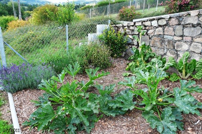 Potager biologique 2011 christiane et michel - Bettes au jardin ...