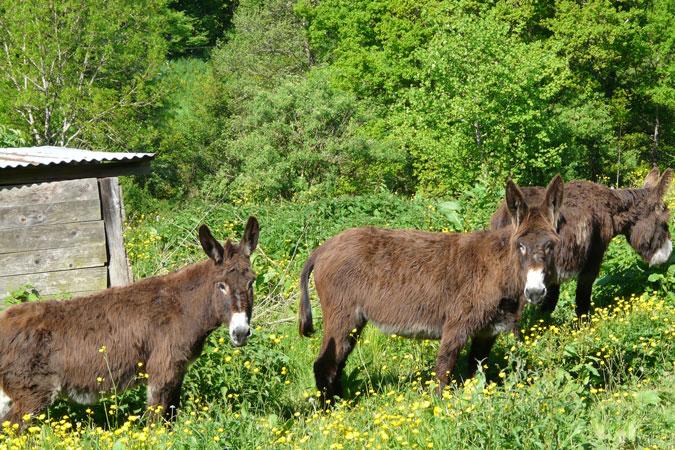 Le fumier d ne christiane et michel - Le fumier de cheval est il bon pour le jardin ...